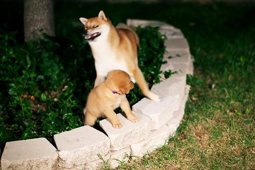 DogsDogsDogs 005