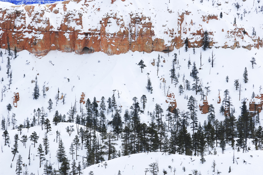 Bryce Canyon Park Landscape