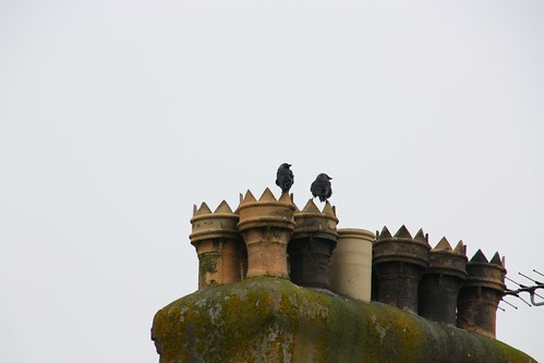 Chimney Pots and Starlings in the town of Tintagel