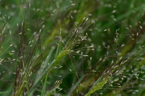 Wild Grass_9819.jpg