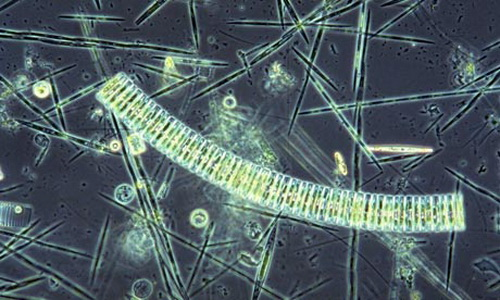 Сброс железа в море поможет забыть про выбросы углерода