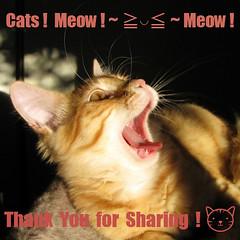 Cats! Meow! ~ ≧◡≦ ~ Meow!