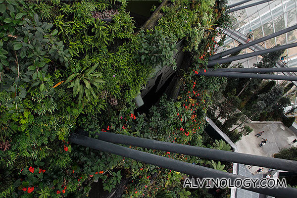 View of the wall plants from the top floor