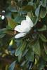 201/366 White Blossom