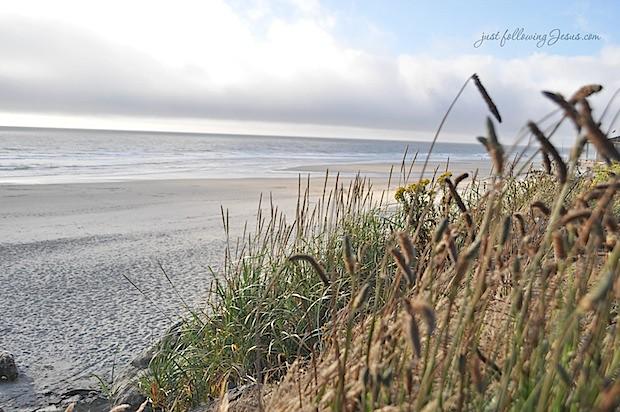 beach 8212h.jpg