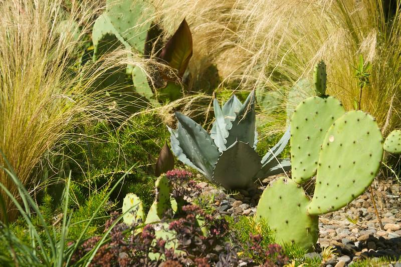 agave cactus stipa  2010