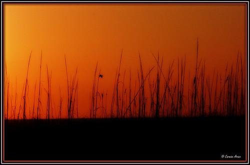 florida coastline arace
