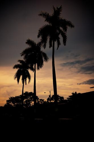 sanantonio palmera panamá anochecer palmas coclé