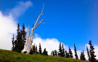 Silver Forest Trail Vista