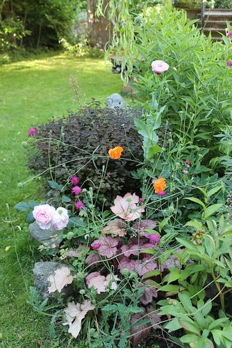 Le jardin de Laurent - Page 2 7752064748_8c7b428e34