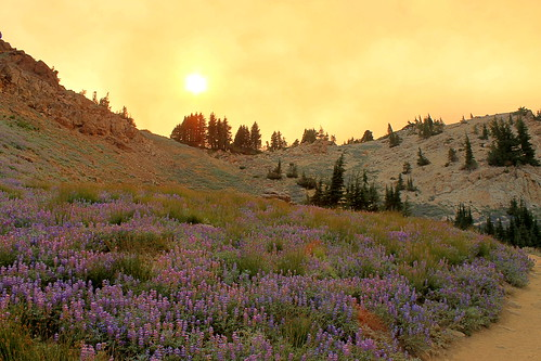 california park flowers sunset orange nature outside fire purple hiking smoke hike national northern volcanic lassen