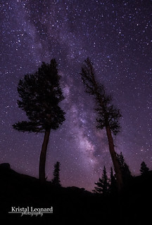 Milky Way among the Pines