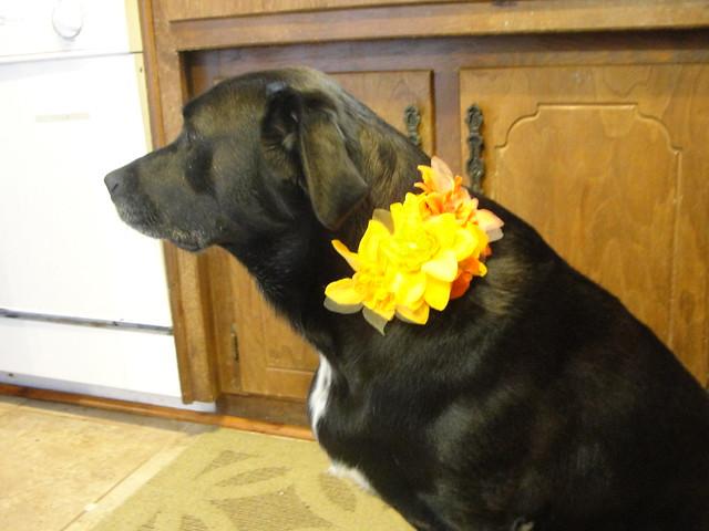 Dog Dress up 08/2012