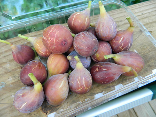 Figs fresh off the tree