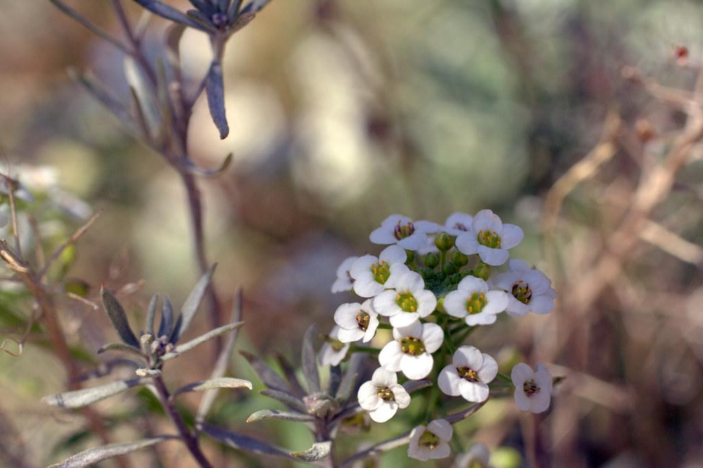 florecillas minúsculas