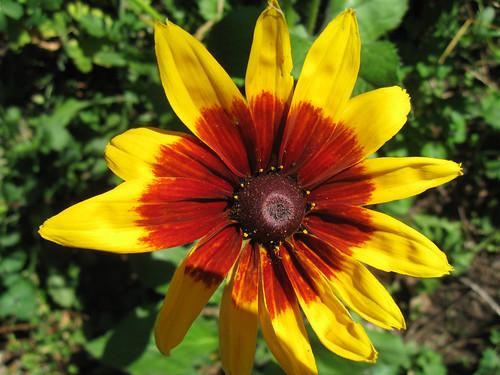 Macro Flowers 5