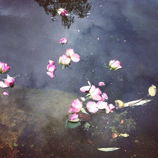 roses (instagram)