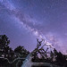 Fallen Tree and the Milky Way by slworking2