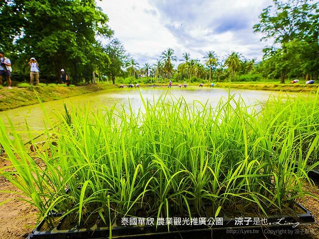 泰國華欣 農業觀光推廣公園 54