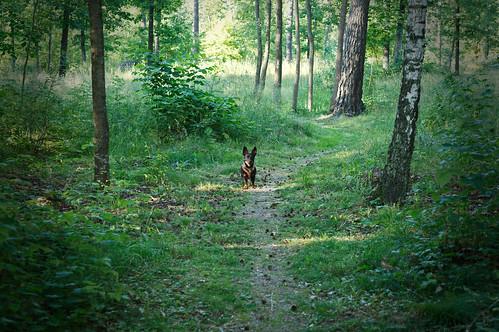 Liten Norrie, stor skog
