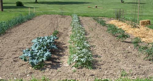 Start a Garden (196/365)