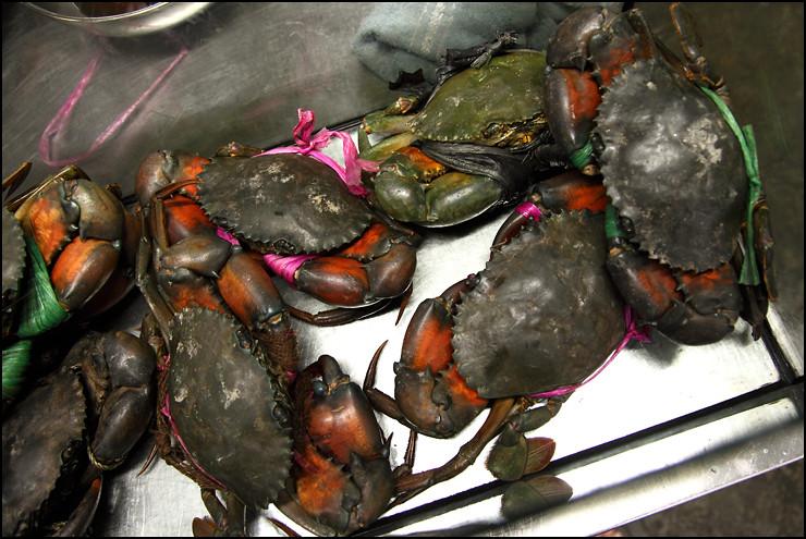 live-australian-crab