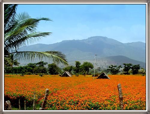 travel orange mountain yellow garden scenery sony morningglory dsc karthisstudio