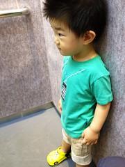 エレベーターのとらちゃん (2012/7/25)