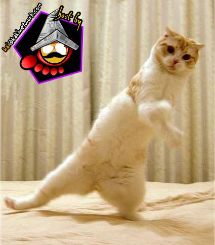 gambar kucing 07