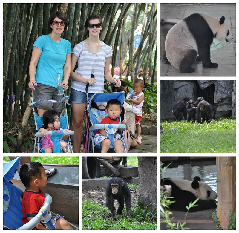 Zoo Collage 5