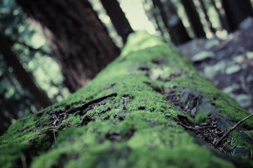 IMG_1044_Snapseed