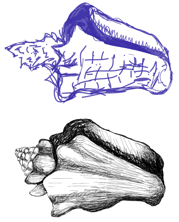 Adobe Ideas Conch Shell