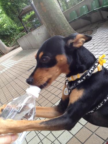 ペットボトルから水補給中w。