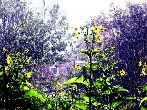 Summer rain in sunshine