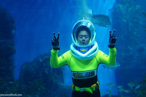 Walk With The Shark Melbourne Aquarium Seawalking