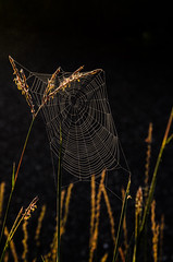 Spider Web_5401.jpg by Mully410 * Images
