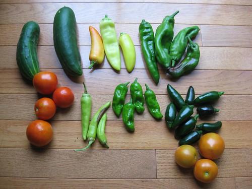 harvest 8-1