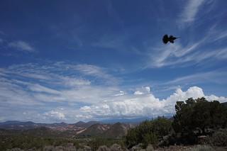 Hummingbird silhouette