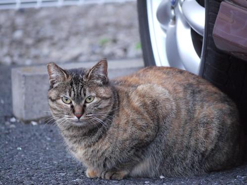 猫@杉並区