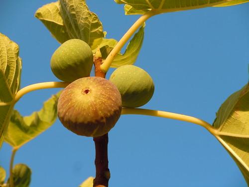 fruit 022