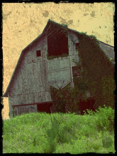 Kalona Ivy Barn