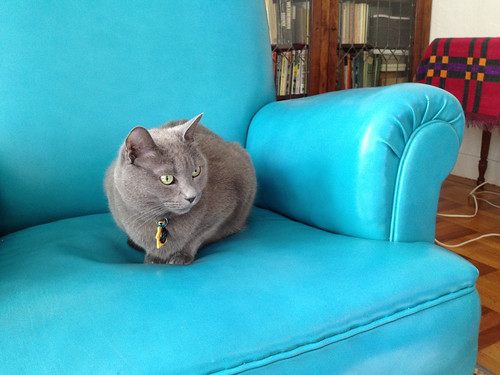 morty wary on blue chair.jpg