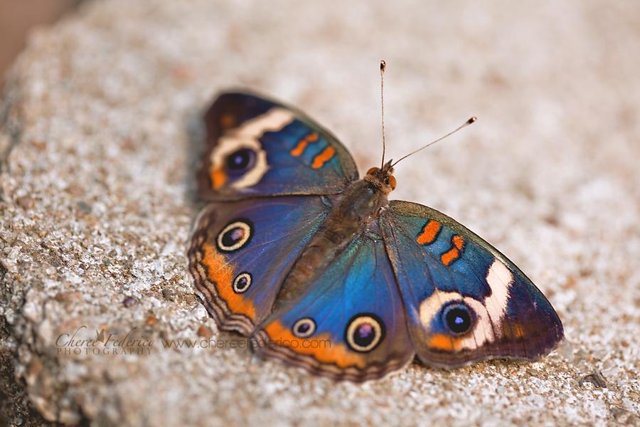 ButterflyEyes_9298_1955