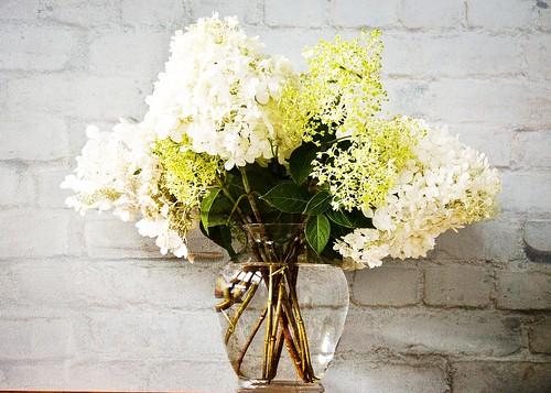Hydrangea Limelight in vase