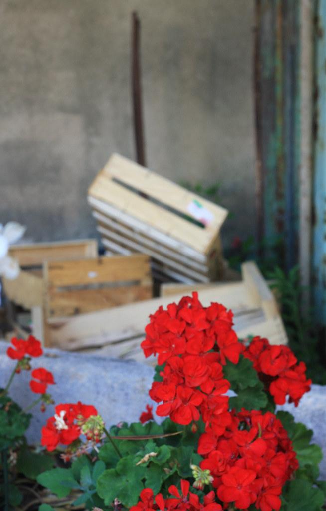 flowersandcrates1-700p