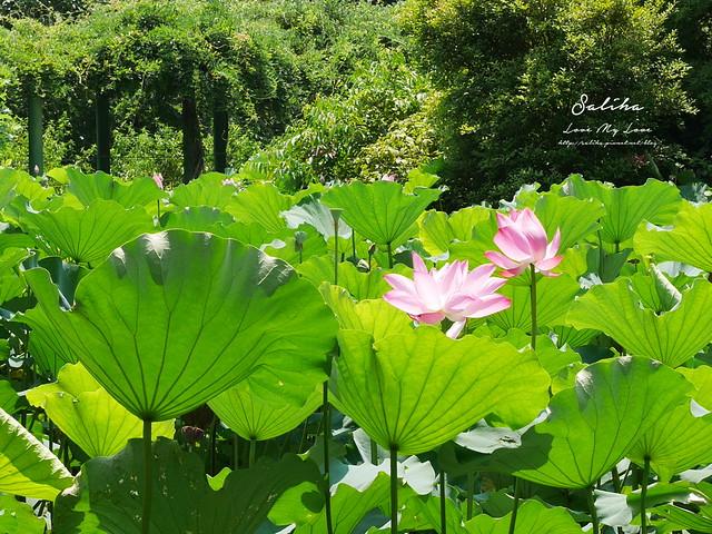 台北一日遊景點推薦植物園荷花蓮花池 (4)