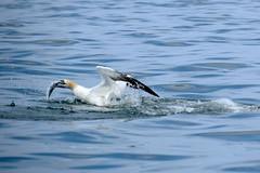 Dolphin Survey trip 7th Sept 2016