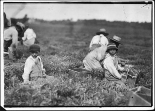 Arthur Fernande, said 8 years old, picking cranberries by hand, and brother Charlie said he was 9 picking with a scoop. Said they work from 9 till 5. Wareham, Mass, September 1911
