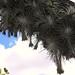Aerófitas - aerophytes under a branch; área por Río Blanca al noroeste de Santo Domingo Yanhuitlán, Región Mixteca, Oaxaca, Mexico por Lon&Queta