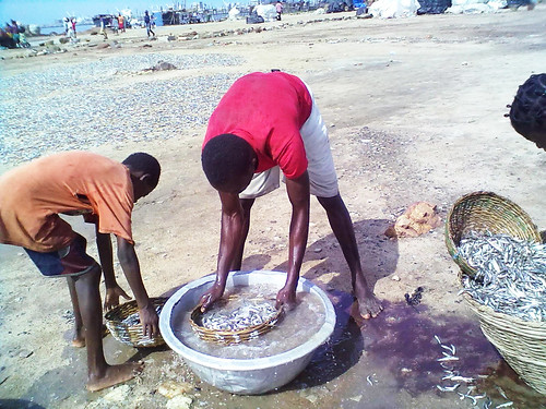 Rinsing fresh fish in Accra, Ghana